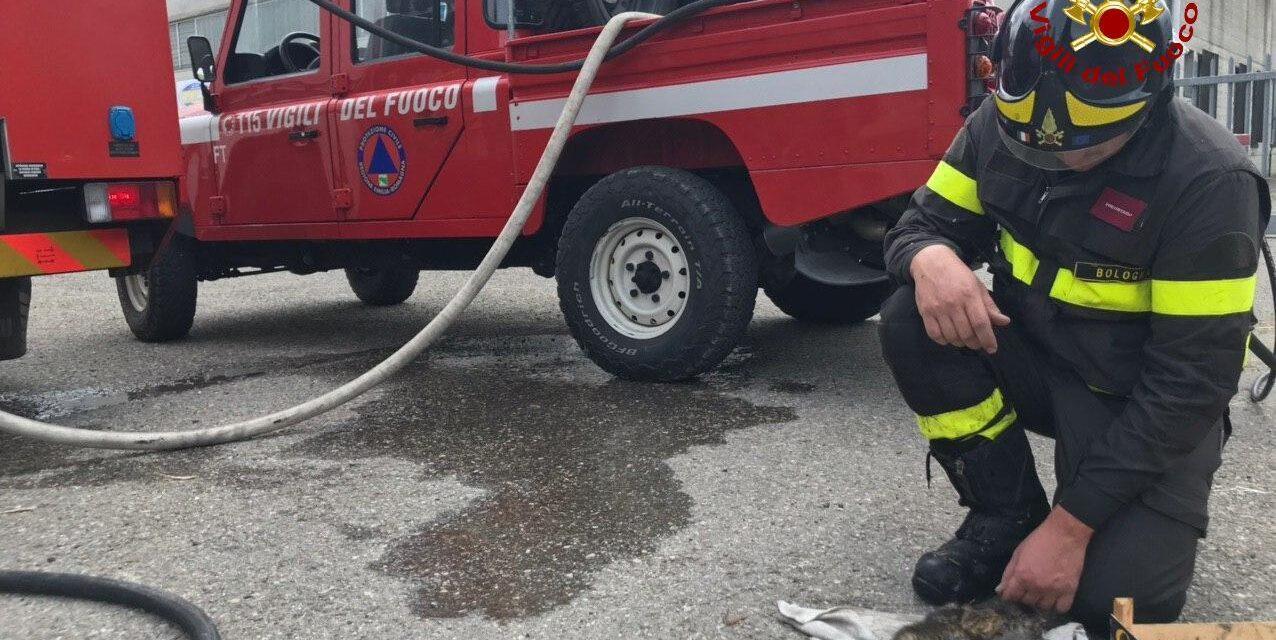 Incendio di sterpaglie, i vigili del fuoco salvano tre gattini