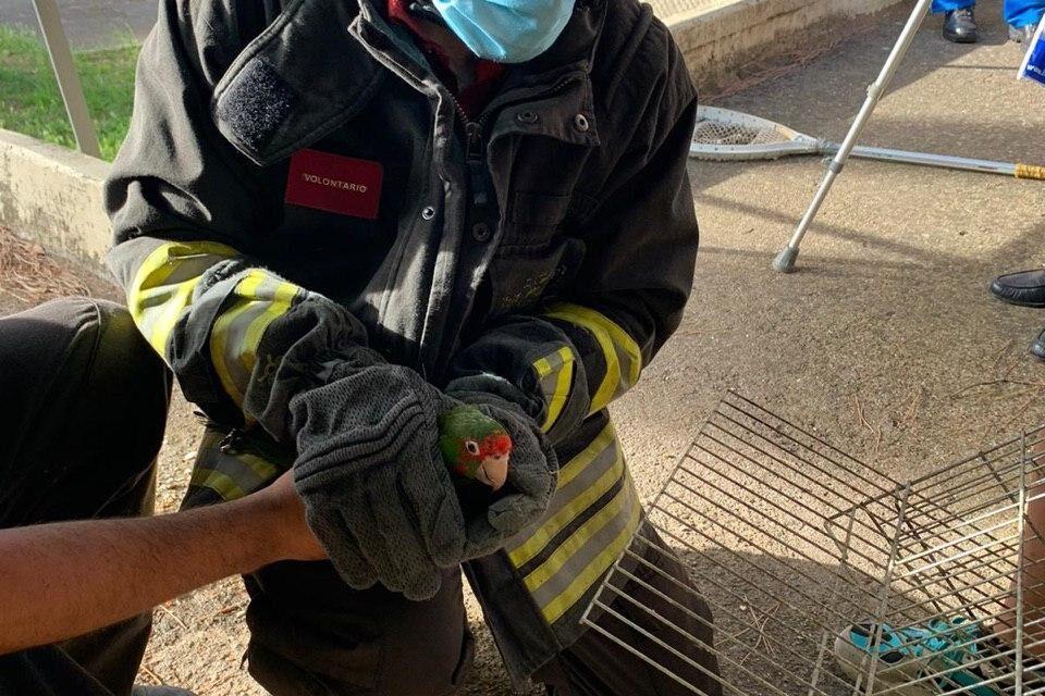 I vigili del fuoco recuperano un pappagallo che era fuggito al proprietario