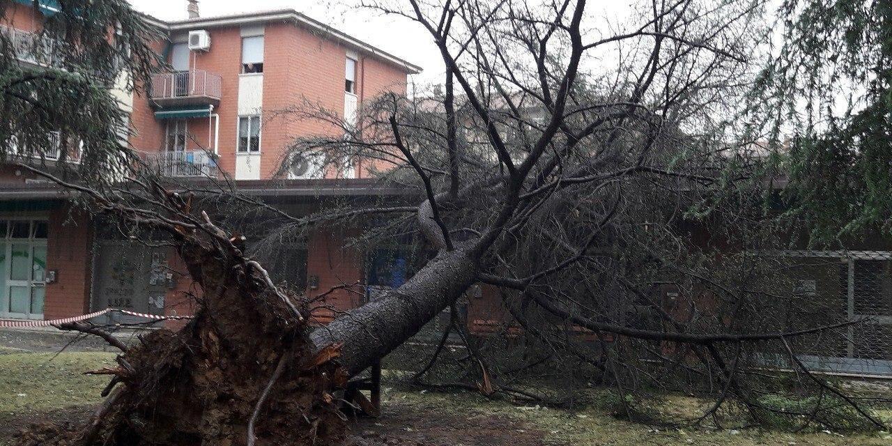 Il maltempo flagella Castel San Pietro, alberi caduti su case e sulle strade