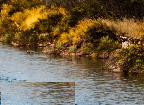 Divieto di attingere acqua in parte del rio Gambellara per batteri pericolosi