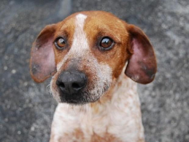 """Salvate i Pepito"", i proprietari di cani contro i tentativi di avvelenarli"