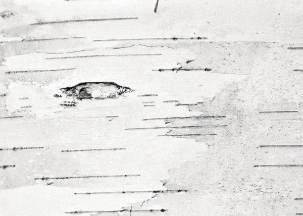 """""""I passi nel bosco"""" di Sandro Campani presentato alla libreria Atlantide"""