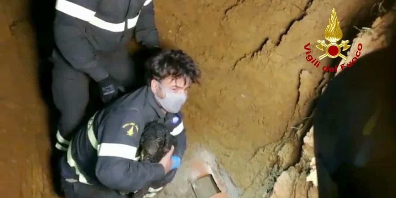 I vigili del fuoco salvano un cane infilato in un tubo per prendere un coniglio