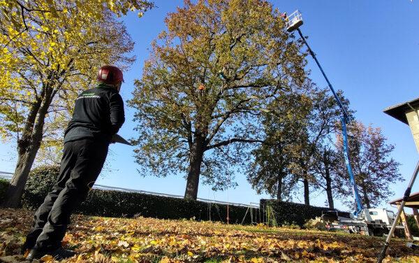 """""""Festa dell'albero"""": prevista la presenza di 1380 nuove piante a Faenza"""