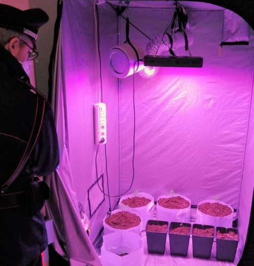 Trovati con una serra per coltivare cannabis in casa, denunciati due giovani