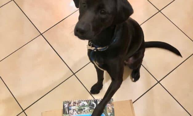 Una raccolta fondi di Natale per il Rifugio del cane Enpa