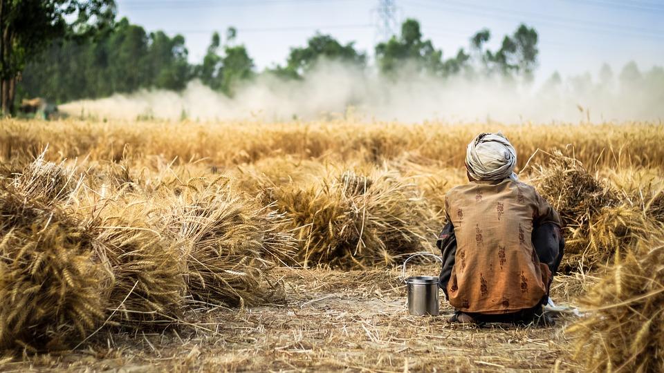 """C'ERA UNA VOLTA: """"L'orgoglio di fare i contadini"""""""