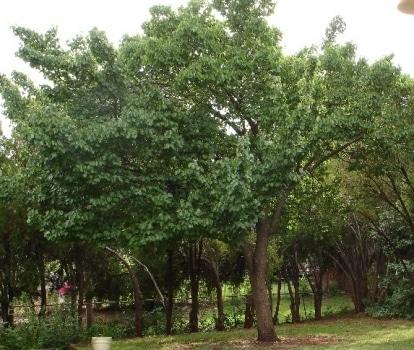 """Lettera di Panieri e Penazzi: """"Per ogni nuovo nato piantiamo un albero"""""""