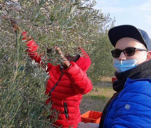 """Faenza: ritorna """"A scuola in bottega"""", giunto al settimo anno"""
