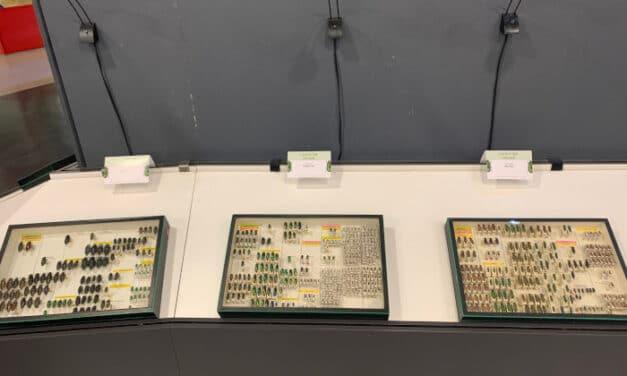 Faenza, una mostra sul vasto mondo dei coleotteri