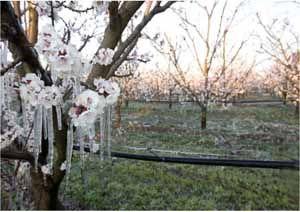 """Gelate di aprile, Cia: """"Danni ingenti alle colture frutticole, servono risarcimenti"""""""