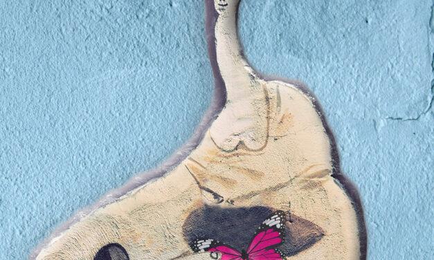 """""""Farfalle nello stomaco"""", uno sportello contro la violenza di genere"""