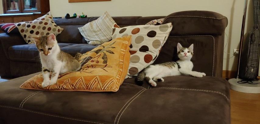 Io, due gatte e la felpa di Gucci