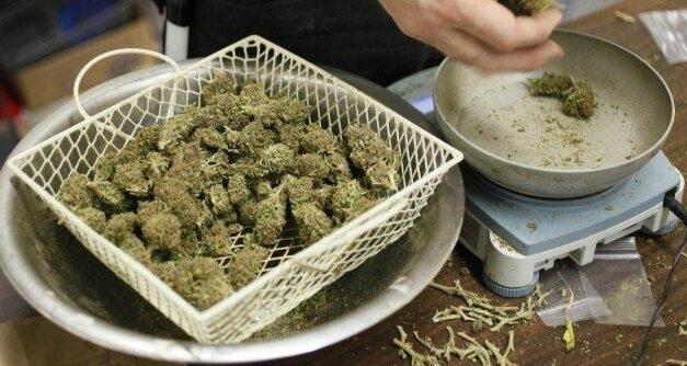 Assemblea d'istituto su cannabis e proibizionismo, scatta la polemica