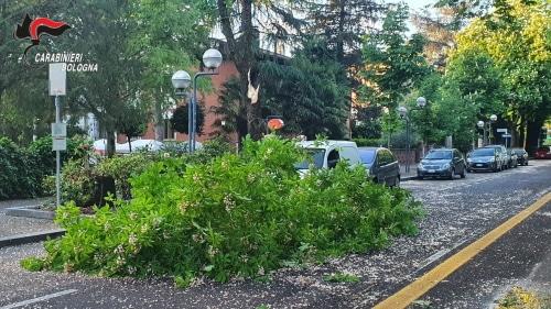 Vento fortissimo e freddo, cade un albero danneggiando un'auto in viale Dante