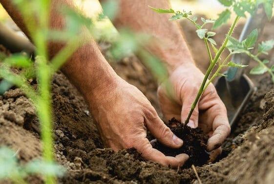 Con Farmerella puoi crea il tuo orto e consumare i prodotti coltivati