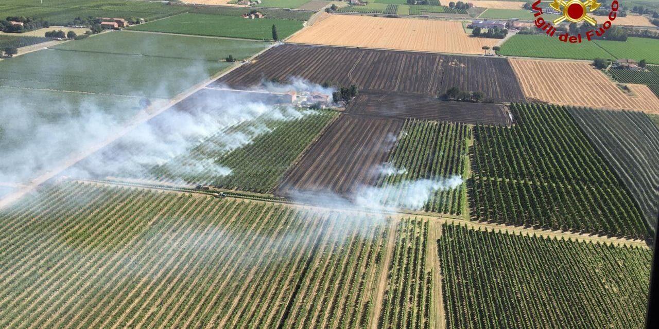 Incendio di oltre dieci ettari in via Lughese, evacuati alcuni cani da caccia