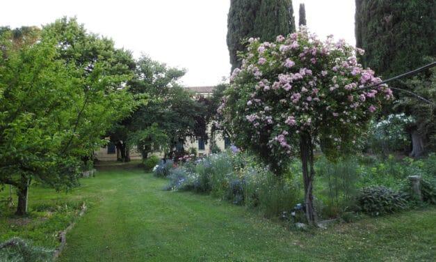"""Il """"Giardino delle meraviglie"""" di Santa Chiara a Faenza"""