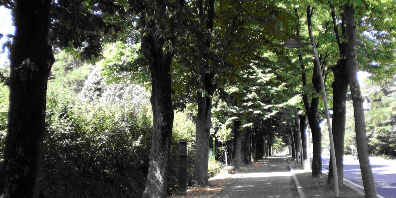"""Al via i lavori per tagliare alberi """"vecchi"""" sul Viale del Piratello"""